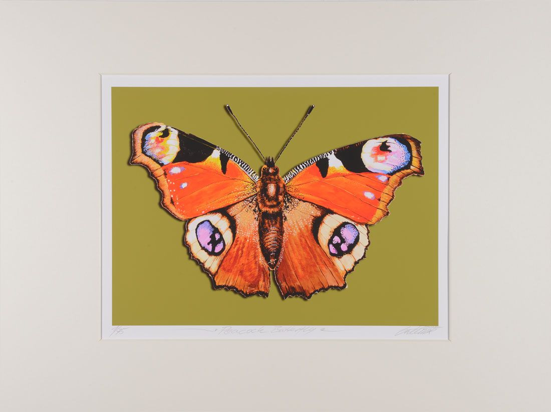 Thomas Gatzemeier | Peacock Butterfly | mittel
