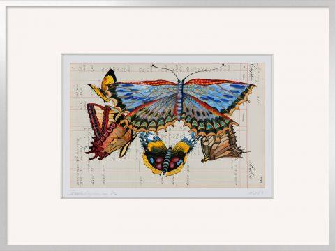 Thomas Gatzemeier Schmetterlingssammlung 212 unlimitiert mit Rahmen