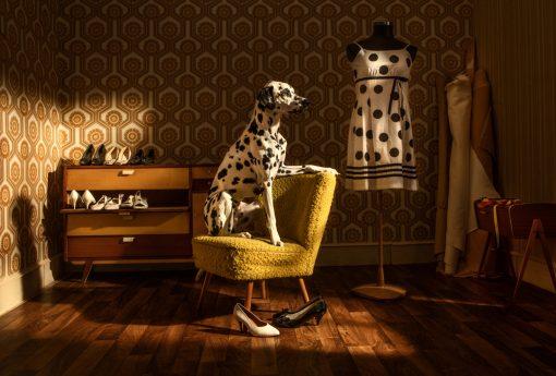 Kistner Postkarten Caesar mit einem Dalmatiner der auf dem Sessel sitzt