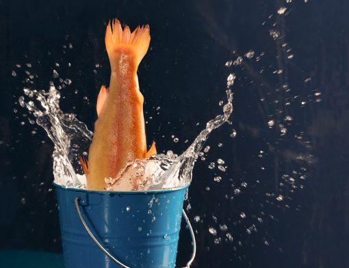 Fisch der in einen Eimer springt