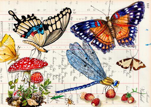 Blauflügellibelle Postkarten von Thomas Gatzemeier mit Schmetterlingen, einer Libelle und Fliegenpilzen