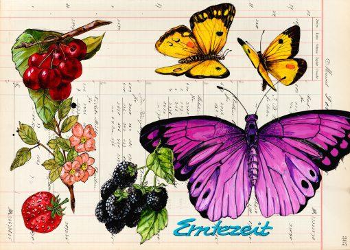 Erntezeit Schmetterings Postkarten mit Früchten